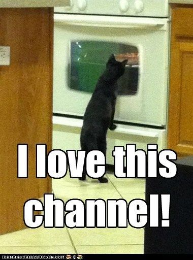 Animal captions · This is so funny