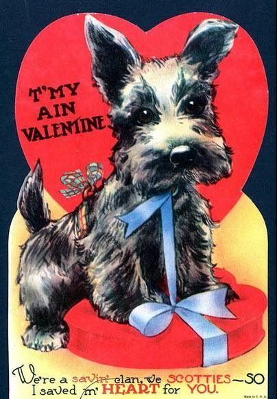 Valentine Scottie dog valentine Scottish terrier