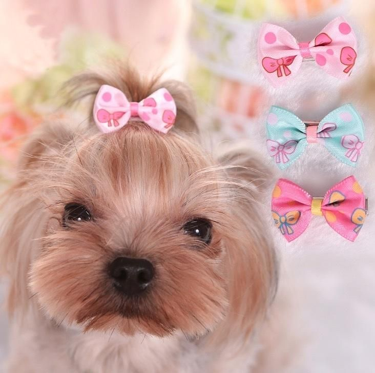 2019 Cute Pet Dog Cat Dog Grooming Beauty Supplies Bows Hairpin Pet Hair Clips Pet Shop Dog Hairband Acessorios From Mubiao9182 $1 11