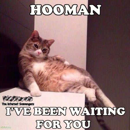 Hooman I ve been waiting for you cat meme Funny meme collection PMSLweb