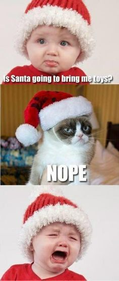 Grumpy cat christmas grumpy christmas grumpy cat humor grumpy cat quotes …For the best humour and hilarious jokes visit