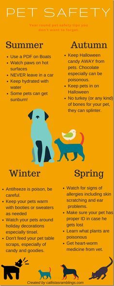 This pet safety infographic will help you to easily visualize these pet safety tips for year