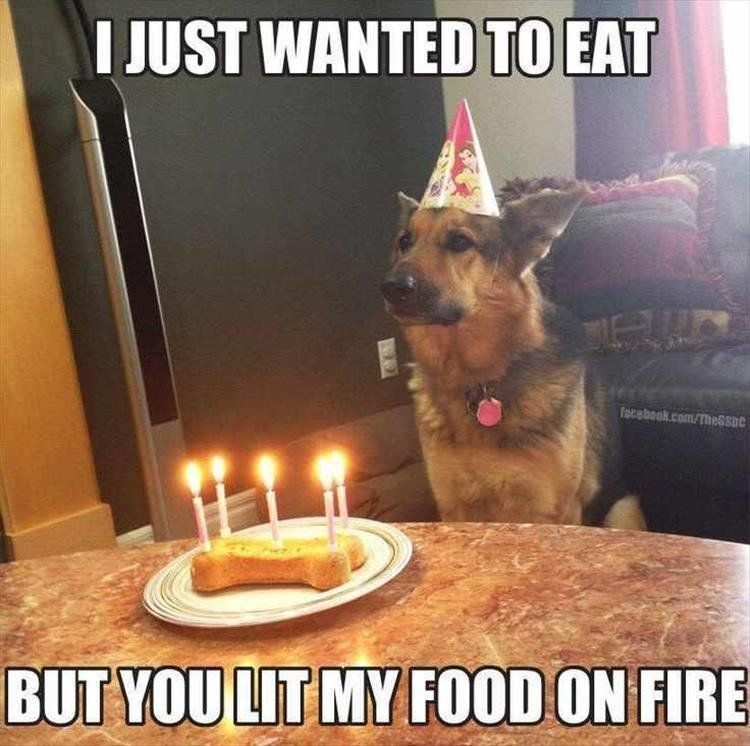 Dog Birthday Quotes Happy Birthday Animals Funny Funny Happy Birthday Happy Birthday