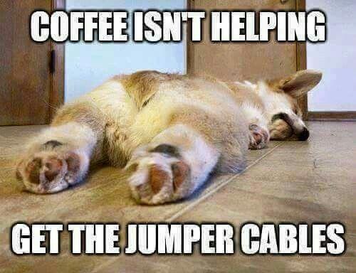 funnydogwithcaptions Funny Sunday Memes Funny Monday Sunday Humor Monday Memes Monday