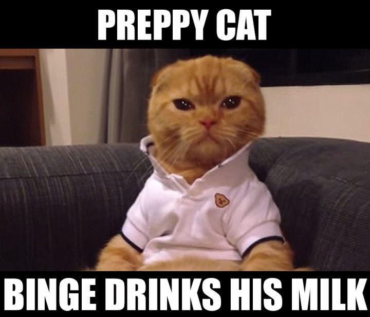 Preppy Cat Meme MILK