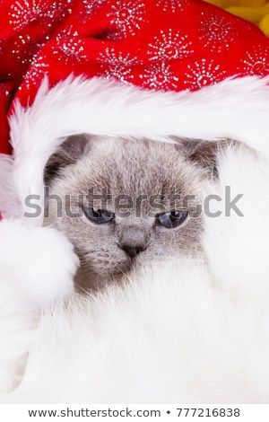Christmas cat with funny santa hat on head christmas cat in red Santa Claus cap