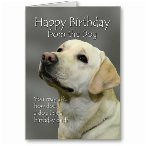 0d Funny Dog Birthday Cards Lovely From the Yellow Lab Greeting Cards Popular Pet Gifts