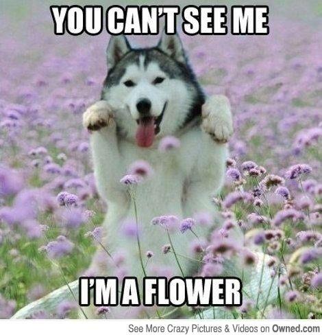 Dog Lover Meme 4
