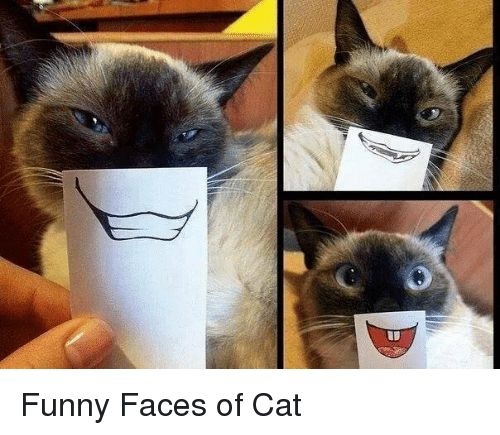 Cats Funny and Cat Funny Faces of Cat