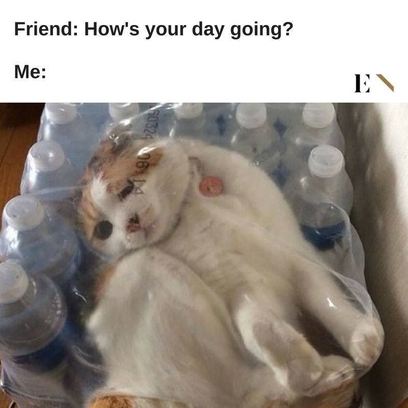 1 When a cat stuck in a water bottle package accurately describes your life ENTITY reports on funny animal memes
