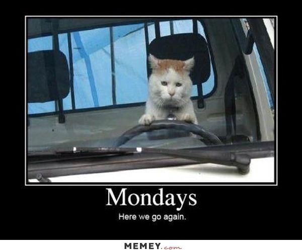Cats Driving with Funny Words