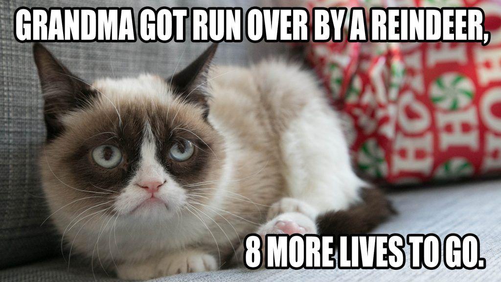 christmas meme grumpy cat best images on pinterest