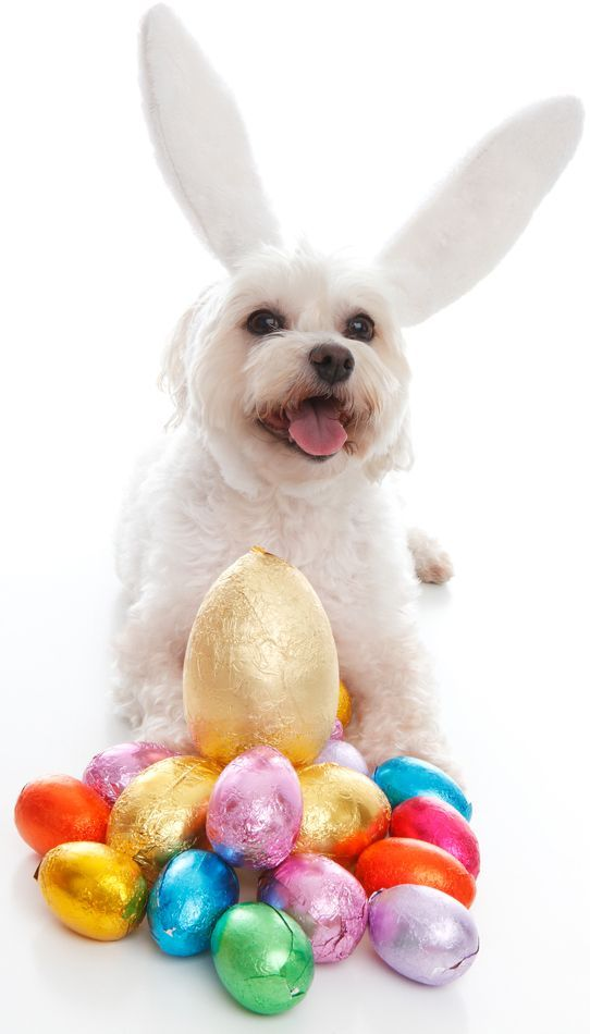 25 cute and funny dog photos featuring a variety of canines of all breeds dressed up and posing for Easter Sunday