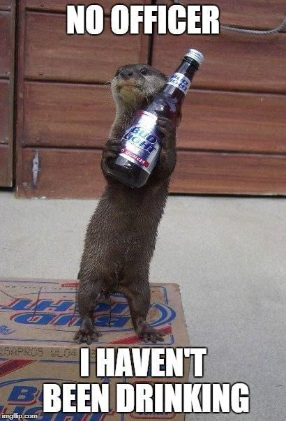 beerhumor Happy Birthday Funny Animal Memes Funny Animals