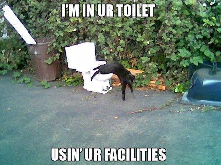 I m In Ur Toilet Cat Meme