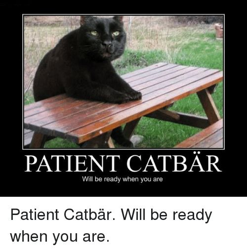 Memes Patient and 🤖 PATIENT CAT BAR Will be ready when you are