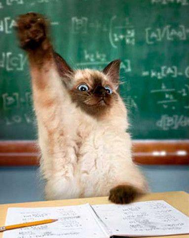 cat raising paw