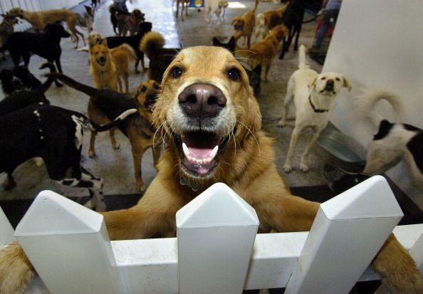 Dog Dayare LFC 56a70ee45f9b58b7d0e66c22