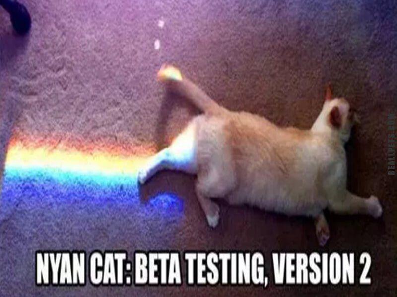 Gather The Unique Clean Funny Cat Memes Hilarious Pets
