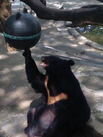 Yangon Zoo funny bears