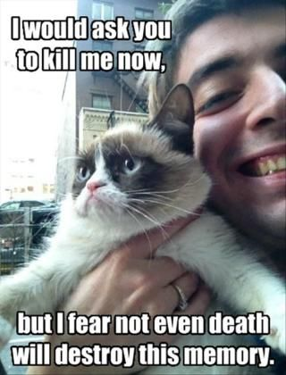 cute cat memes about christmas Zoom 32 Funny Angry