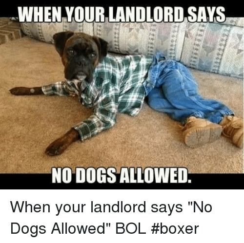Dogs Memes and Boxer WHEN YOUR LANDLORD SAYS NO DOGS ALLOWED When your