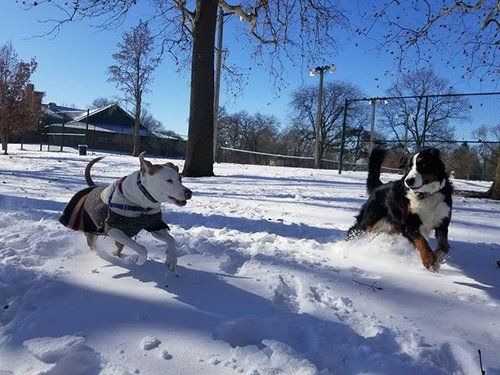 These pups have been having so much fun in the snow Bring on some more