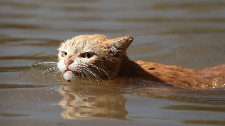 Angry Cat Swimming Through Hurricane Harvey Gives People Much Needed Moment Laughter The cat went looking for Harvey himself to bite in the
