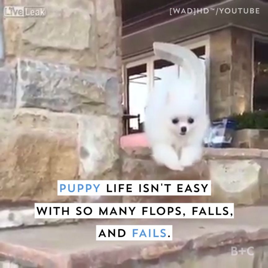 Watch this video for some hilariously adorable puppy fails