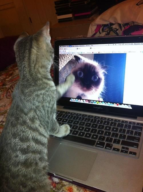 cat skype No you don t cat kitty pc