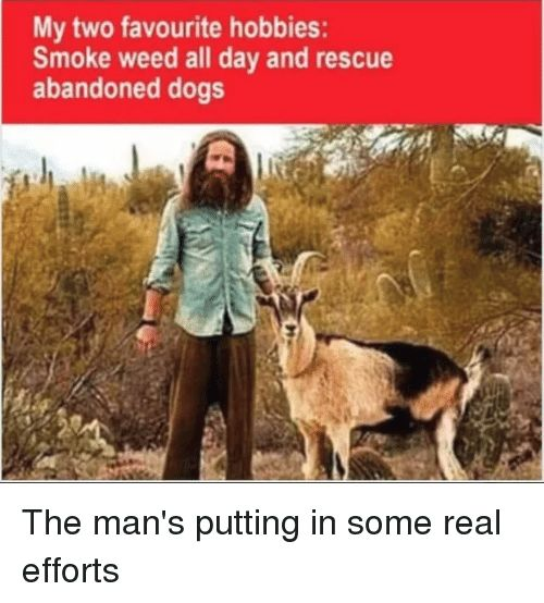 Dogs Funny and Weed My two favourite hobbies Smoke weed all day
