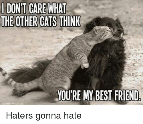 Memes 🤖 and Haters Gonna Hate DONT CARE WHAT THE OTHER CATS THINK