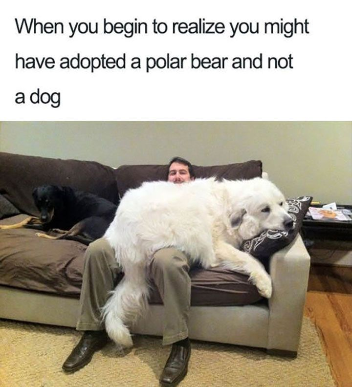 Funny Animal Meme That Make You Cry With Laughter 16