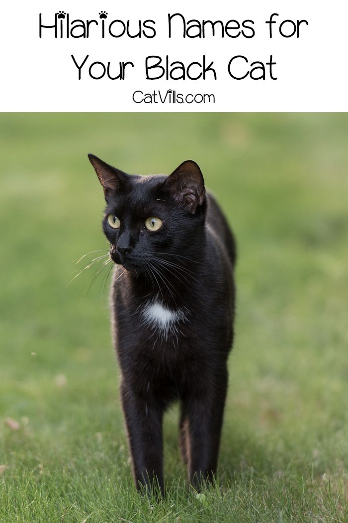If you re looking for some cute black cat names you ll love