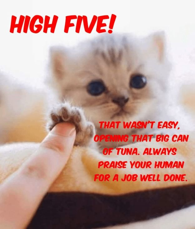 cat caption high five human praise tuna opening