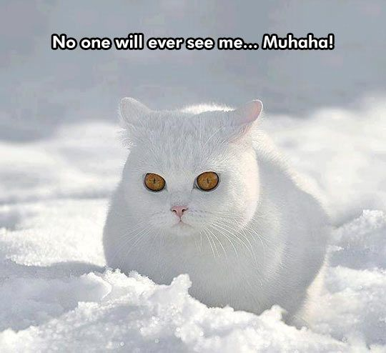 Blending into the background 540x494 Funny cat in snow videos