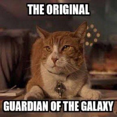 Beautiful Super Cute Animal Cute Cat Meme Funny Quotes Memes Jokes