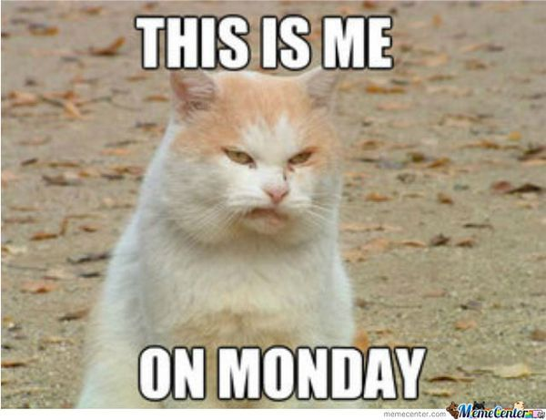 cat Monday meme
