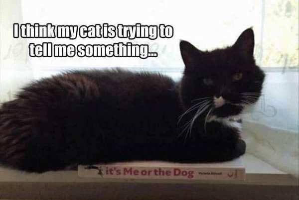 Cat Image Funny animal Meme Grumpy Cat Internet meme Othinkmycalistryingto