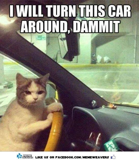 Gather the Stunning Funny Cat Driving Pictures