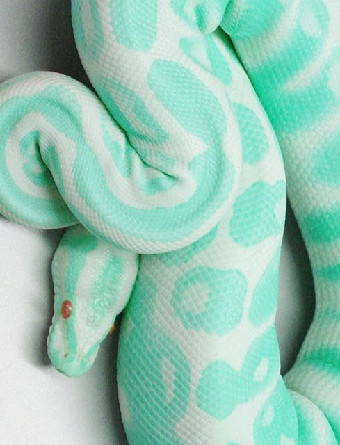 Wauw an aqua colored snake Amazing