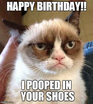 Gather the Stunning Funny Happy Birthday Memes Cat