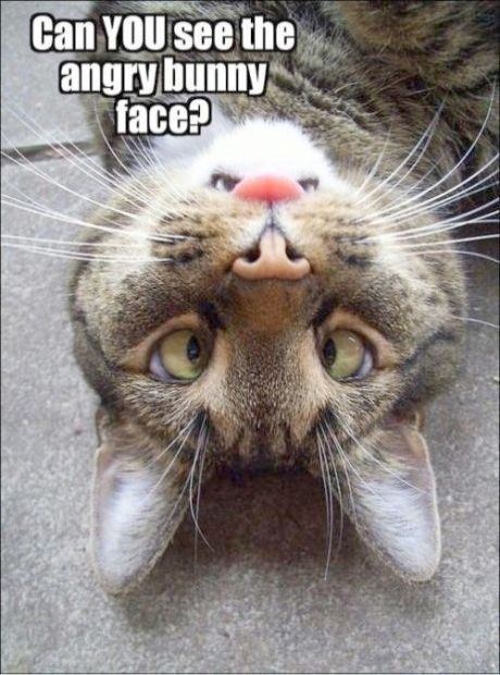 Funny Cat s With Captions xo