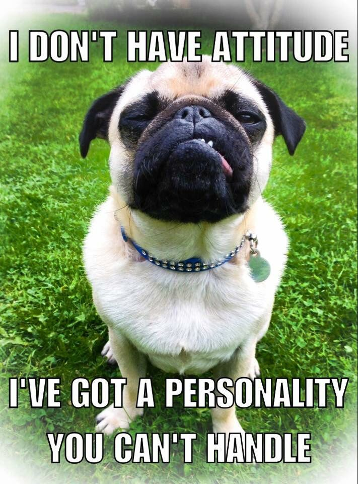 Funny Animal Memes Dog Memes Funny Dogs Funny Animals Funny Memes
