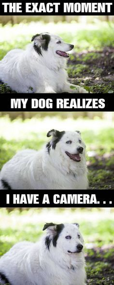 Funny of the day Camera shy dog 73 Pics Cute Funny Animals