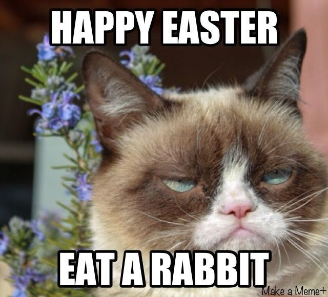 Happy Easter Grumpy Cat s and for