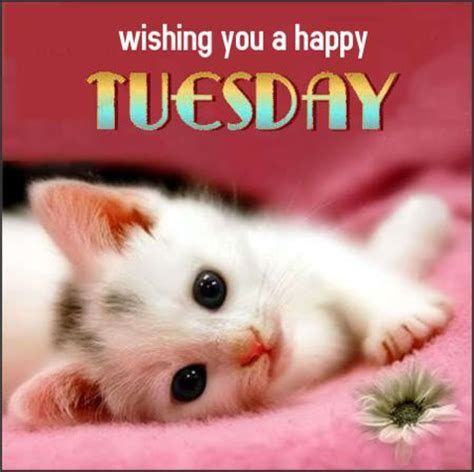 Wishing you a happy tuesday day greeting kitten cat 450x449 Funny good morning cat meme