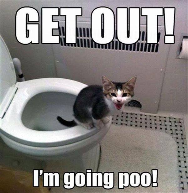 Funny Rude Funny Cat Pics Funny