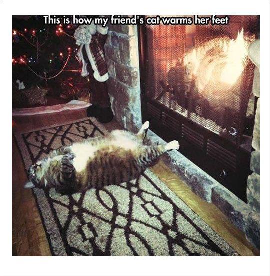 funny snapchat cat memes warm feet