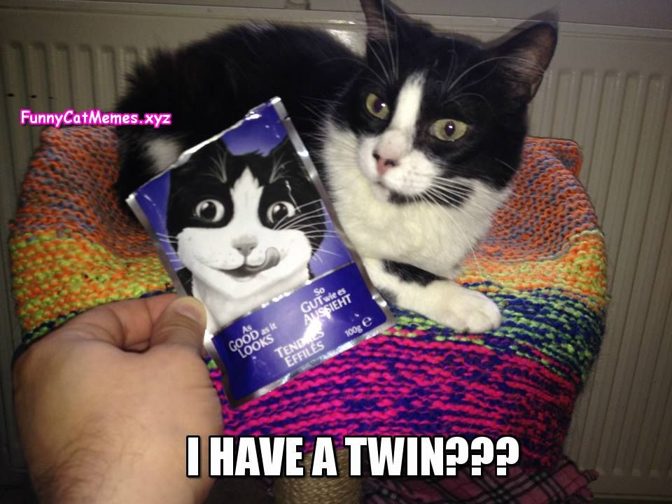 I Have A Twin Funny Cat MEME